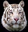 tigerlogo